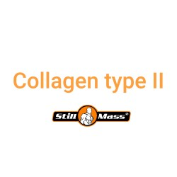 Collagen type II 100g- STILL MASS